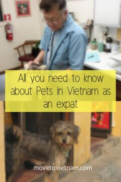 Here are the important things you need to know about pets in Vietnam. If you want to know how to import a pet in Vietnam or how to export a pet from Vietnam, you will find it here. Plus info about adopting a pet in Vietnam #petsinvietnam #importingapetinvietnam #exportingapetfromvietnamm #adoptapetfromvietnam