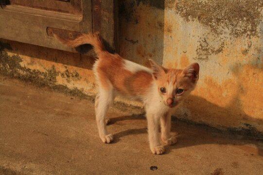 pets in vietnam