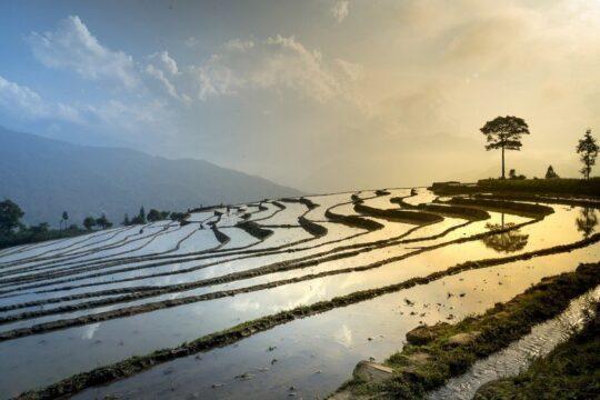 best time to go to vietnam - rice field, sa pa, sapa